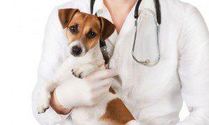 ¿Por qué esterilizar a tu perro es una buena idea? Aquí te damos unas 9 razones.