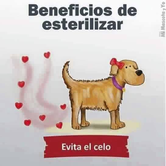 9-razones-de-porqué-esterilizar-a-tu-perro