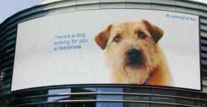Un perro en un panel que realmente sigue a las personas