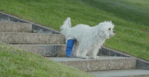 Amazon y un perro enyesado conmueven en Internet