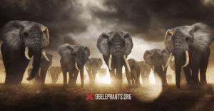 Billy Joel crea una interesante campaña que desea que la compartas parar salvar a los elefantes