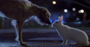 Un emotivo spot que muestra las cosas por las que tienen que pasar algunas mascotas