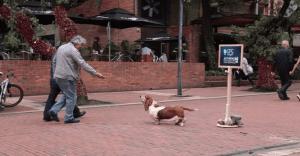 El perro de Hush Puppies llega para alegrar el día de decenas de colombianos