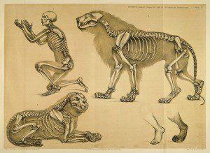 Datos curiosos  sobre los huesos de los animales que seguramente desconocías