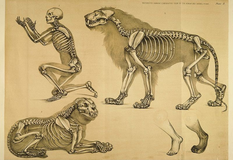 Datos curiosos sobre los huesos de los animales que seguramente ...