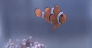 Nemo R.I.P