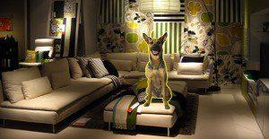 Adorables caninos adornan las tiendas IKEA para ser adoptados