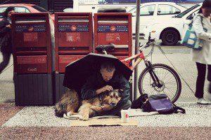 indigentes-perros-lealtad-7