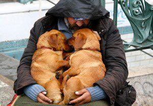 indigentes-perros-lealtad-8