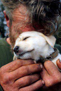 indigentes-perros-lealtad-9