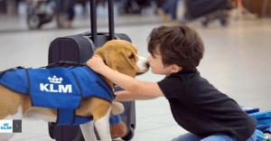 """KLM presenta el más tierno servicio de """"cosas perdidas"""""""