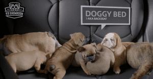 Adorables perritos venden los carros usados de MINI