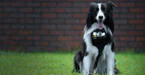 Una nueva apuesta de las cámaras Nikon para los engreídos de la casa