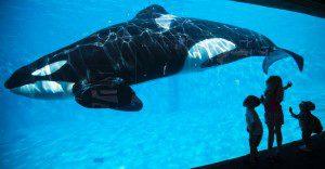 ¿Tiene acaso SeaWorld alguna manera de salvar su imagen?