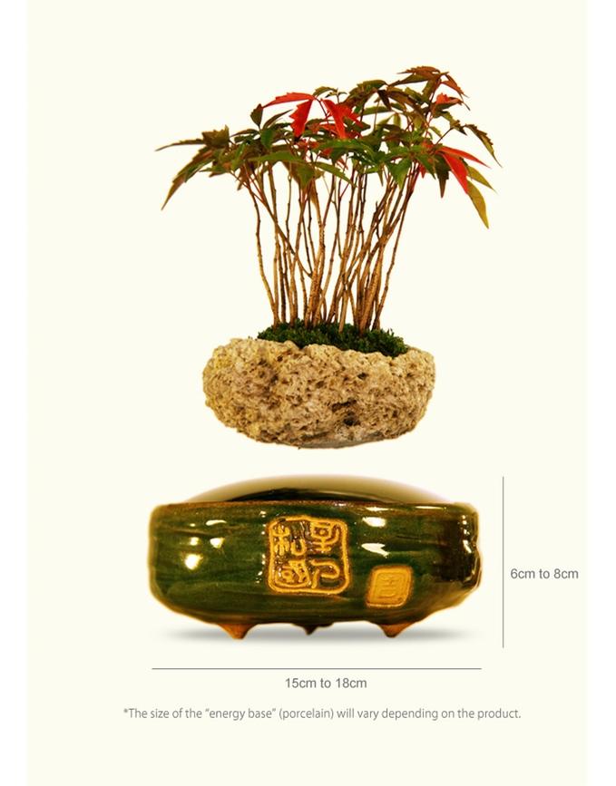 bonsai-magico-flotante-1