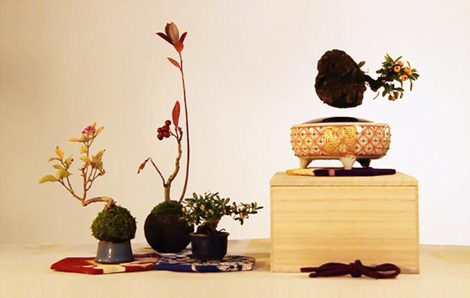 bonsai-magico-flotante-10