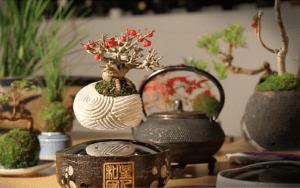 ¿Te gustan los pequeños árboles bonsái? Pues estos tienen algo especial, ¡son flotantes!