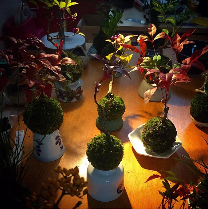 bonsai-magico-flotante-6