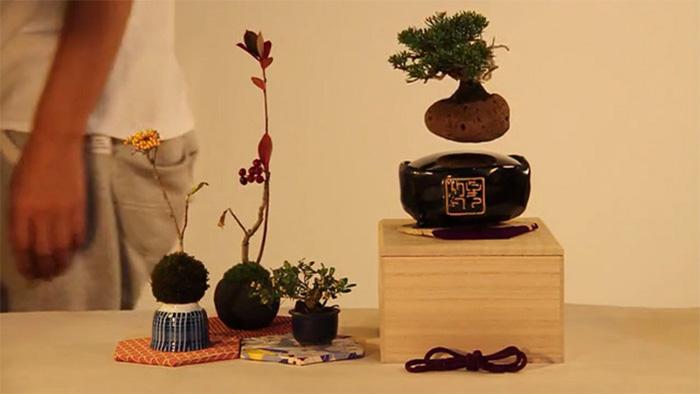 bonsai-magicos-flotantes-2