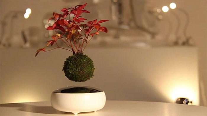 bonsai-magicos-flotantes