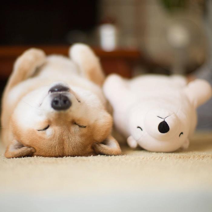 01-imagenes de perros graciosos