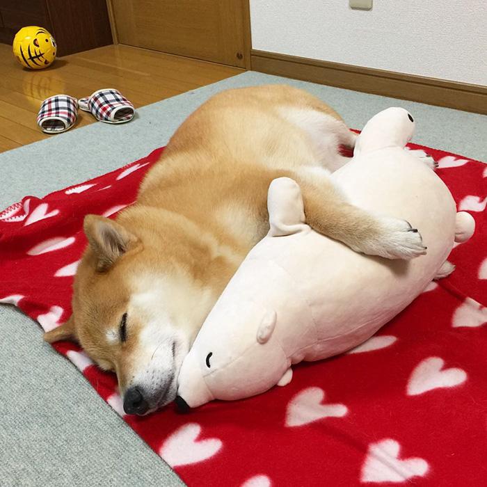 imagenes de perros durmiendo