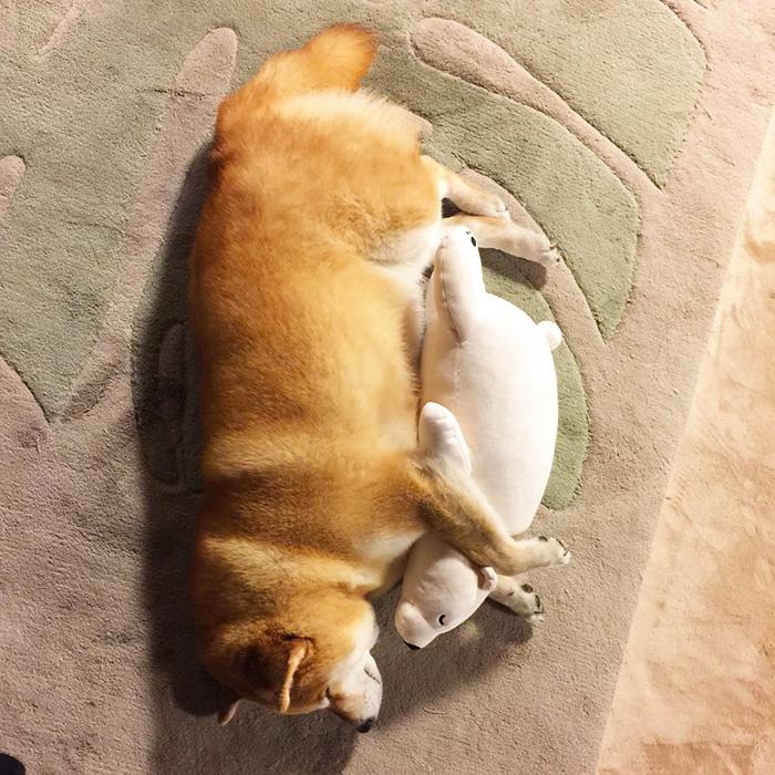 imagenes de perros tiernos