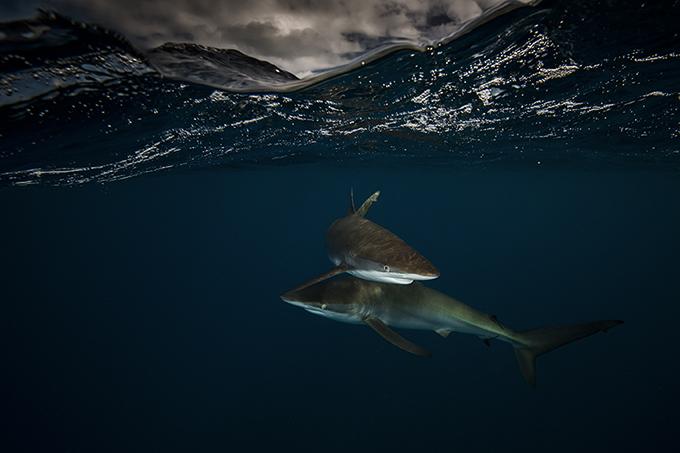 especies-marinas-como-nunca-antes-las-viste-10