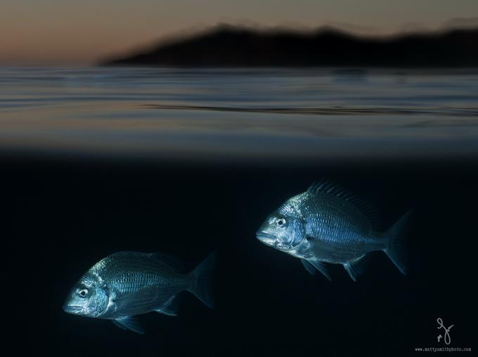 especies-marinas-como-nunca-antes-las-viste-11