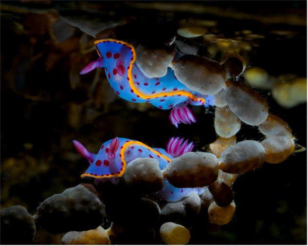 especies-marinas-como-nunca-antes-las-viste-12