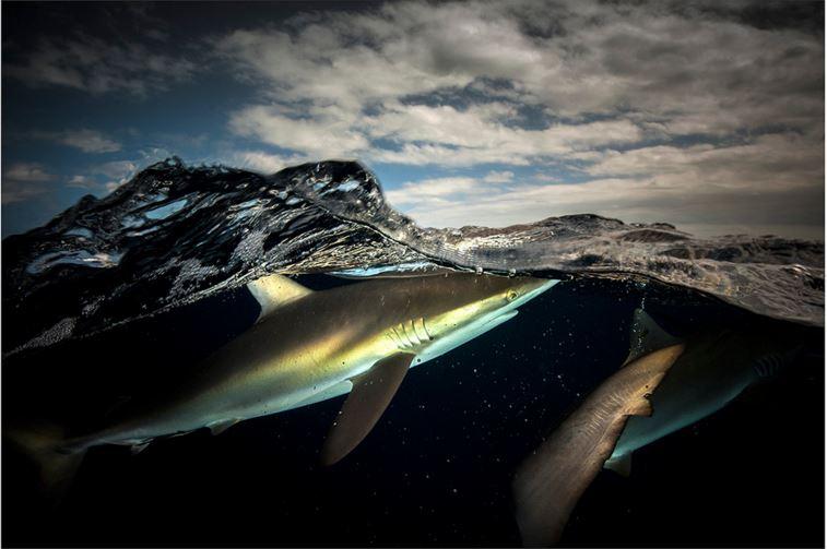especies-marinas-como-nunca-antes-las-viste-13