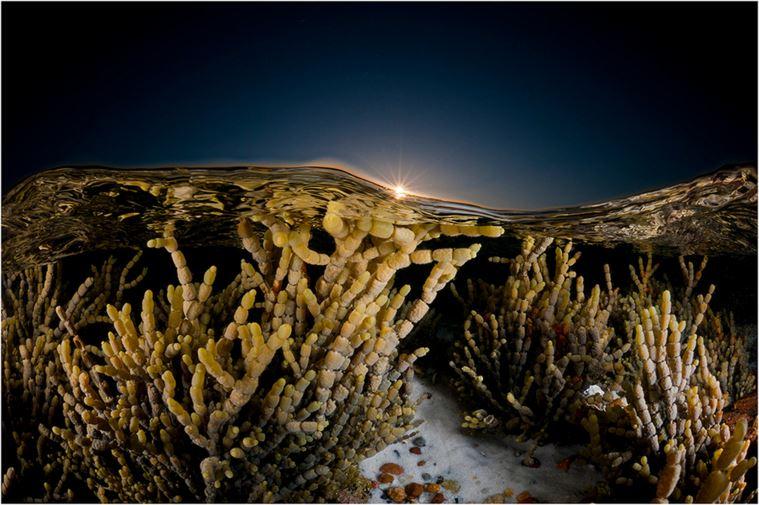 especies-marinas-como-nunca-antes-las-viste-14