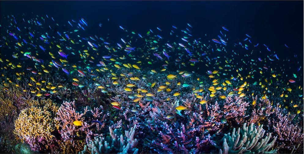 especies-marinas-como-nunca-antes-las-viste-15