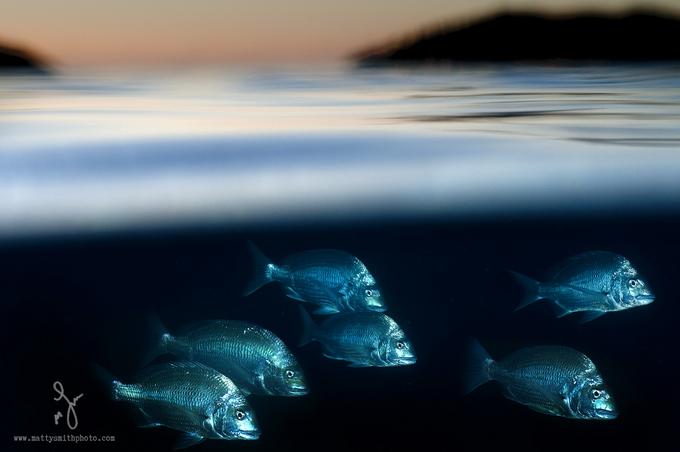 especies-marinas-como-nunca-antes-las-viste-7