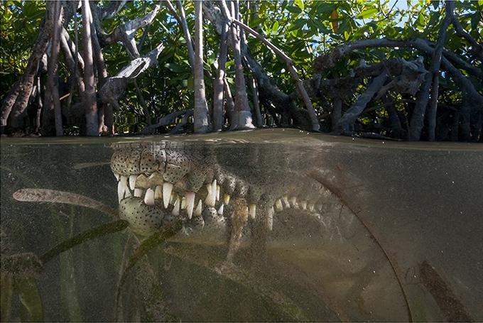 especies-marinas-como-nunca-antes-las-viste-8