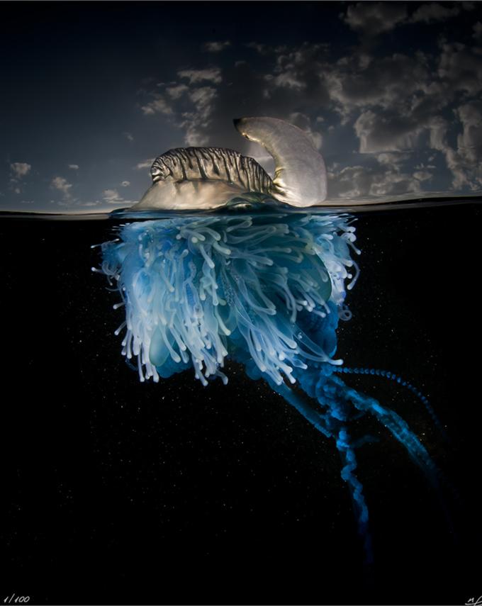 especies-marinas-como-nunca-antes-las-viste