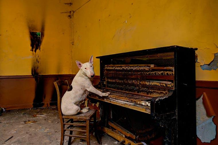 fotógrafo-recorre-Europa-fotografiando-a-su-Bull-Terrier-10