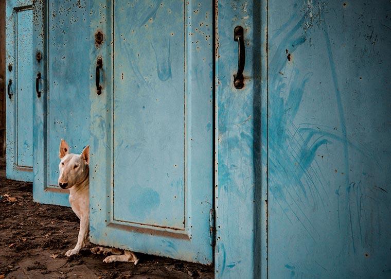 fotógrafo-recorre-Europa-fotografiando-a-su-Bull-Terrier-11