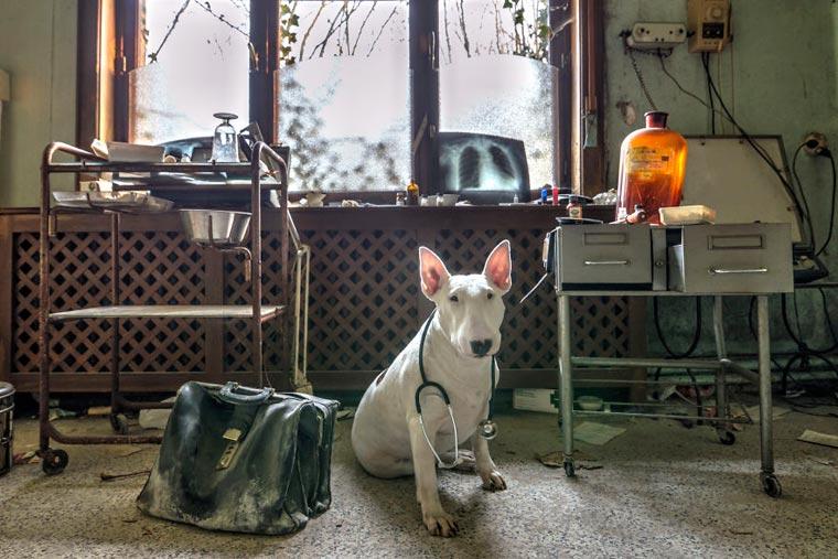 fotógrafo-recorre-Europa-fotografiando-a-su-Bull-Terrier-14