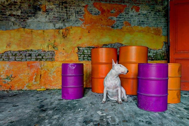 fotógrafo-recorre-Europa-fotografiando-a-su-Bull-Terrier-15