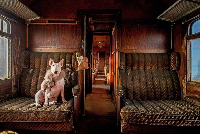 fotógrafo-recorre-Europa-fotografiando-a-su-Bull-Terrier-16