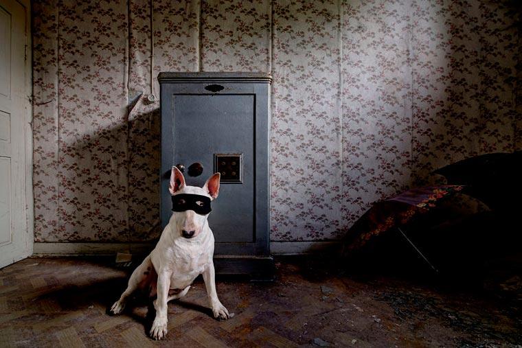 fotógrafo-recorre-Europa-fotografiando-a-su-Bull-Terrier-17