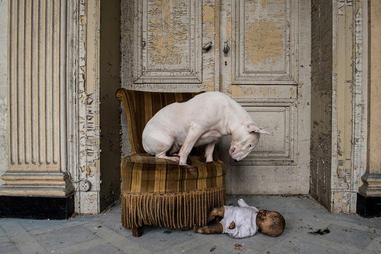fotógrafo-recorre-Europa-fotografiando-a-su-Bull-Terrier-2