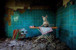 Fotógrafo recorre Europa fotografiando a su Bull Terrier