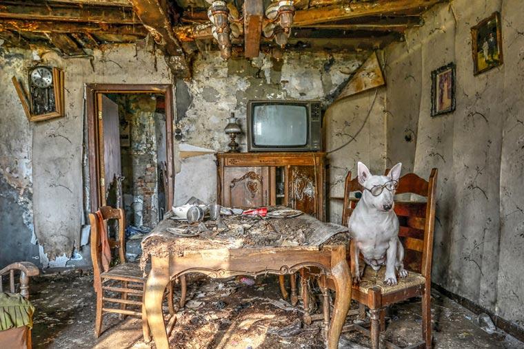 fotógrafo-recorre-Europa-fotografiando-a-su-Bull-Terrier-5