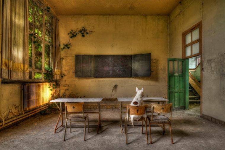 fotógrafo-recorre-Europa-fotografiando-a-su-Bull-Terrier-6