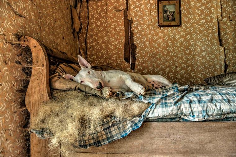 fotógrafo-recorre-Europa-fotografiando-a-su-Bull-Terrier-7
