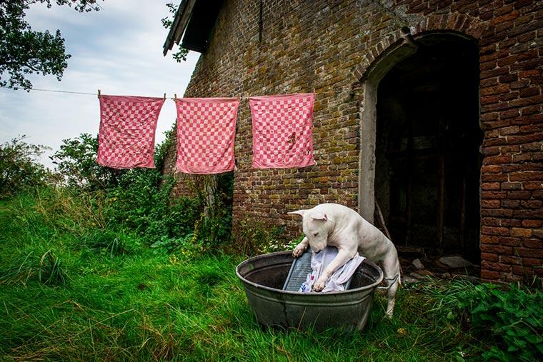 fotógrafo-recorre-Europa-fotografiando-a-su-Bull-Terrier-8