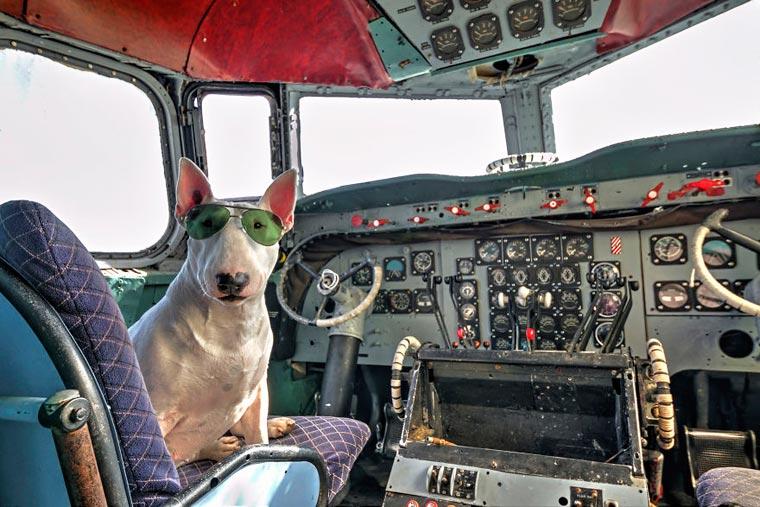 fotógrafo-recorre-Europa-fotografiando-a-su-Bull-Terrier-9