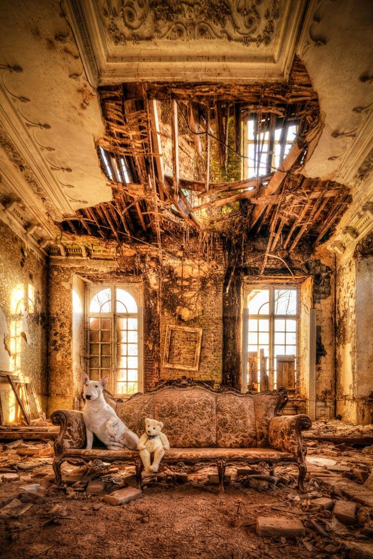 fotógrafo-recorre-Europa-fotografiando-a-su-Bull-Terrier